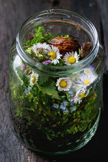 Composition with Wildflowers, moss and walnuts in glass jar over old wooden background. Top view with copy space Jar Wildflowers Mason Wedding Flowers Flower Bouquet Spring Nature Natural Country Decor Blue Decoration Decorations Color Bunch Mixed Background Moss Chamomile Daisy Yellow Glass Wooden Green Summer White Beautiful Garden Flora Arrangement Forest Decorative Variety Wildflower Bright Design