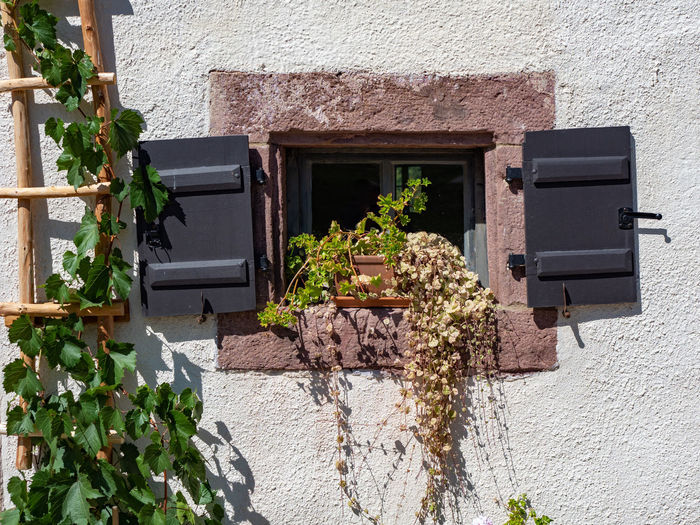 Potted plants on wall of house