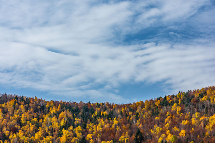 Low angle view of yellow trees against sky during autumn