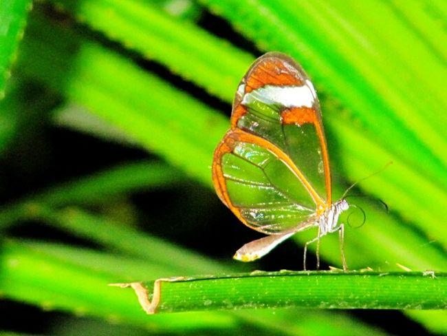 Farfalla Butterfly Verde Green Nature Natura Spettacolare♡ View Natura Meravigliosa Jardin Botanico Amsterdam Giardino Orto Botanico