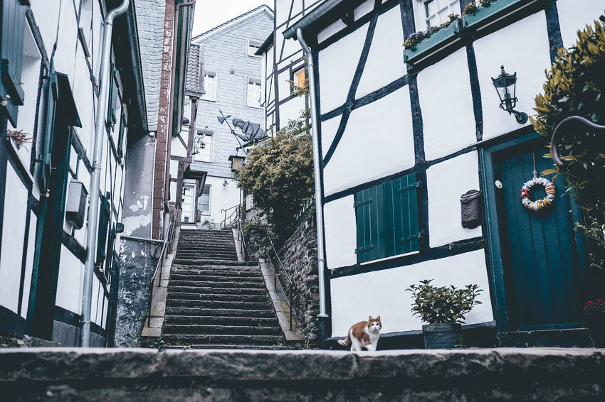 One Animal Day Outdoors Animal Themes Architecture Building Exterior No People City Sky Nature Fujifilm Old-fashioned Fujifilm_xseries Landscape_photography Ruhrgebiet FUJIFILM X-T2 Ruhrpottromantik Ruhrpottliebe Ruhrpottblogger Altstadt Old Town City Built Structure Residential Building Architecture