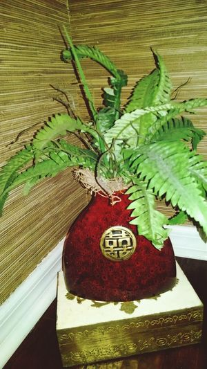 Burgandy Colored Gold Colored Oriental Vase Fern Plant Nature Photography Plant Photography Green Color Leaf Day Nature Beauty In Nature Colour Your Horizn The Still Life Photographer - 2018 EyeEm Awards The Street Photographer - 2018 EyeEm Awards