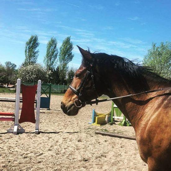 🐴🌼 Beautiful Boy Horse Love My Horse Spring Sporthorse Holsteiner Clinton Cassini ||