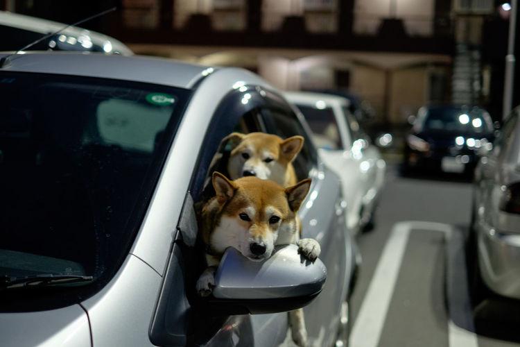 Dog Domestic Animals Animal Themes Mammal Japan Photography Fujifilm X-E2 Fujifilm_xseries Fujifilm 日本