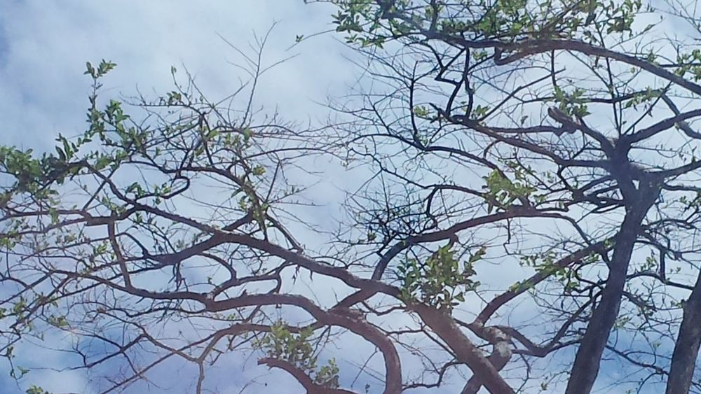 Tree And Sky Huggingatree  Branches And Sky Nature Lover Beautiful Nature Taking Photo