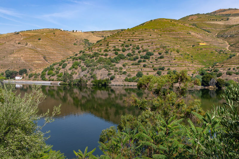 Douro river with vineyards in surrounding valley Douro  Hills Portugal Beauty In Nature Day Environment Growth Lake Land Landscape Mountain Nature No People Non-urban Scene Outdoors Plant Reflection Riverbank Scenics - Nature Sky Tranquil Scene Tranquility Tree Vineyard Water