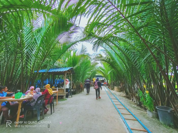 Group of people walking on palm trees