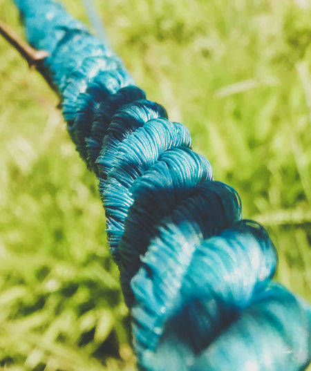 Blue Close-up Nature Outdoors No People Day EyeEmNewHere Rope EyeEm Best Shots New Eyeem EyeEm Nature Lover Low Angle View Focus On Foreground