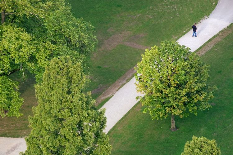 High angle view of man walking on pathway amidst trees growing at park