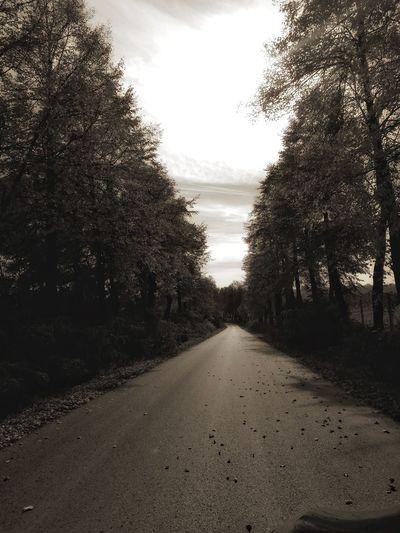 Jesień Nature Beautiful Nature Autumn🍁🍁🍁 Sky No People Tree