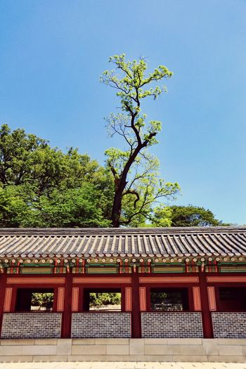 Traditional Palace Alone Tree Day Clear Sky Roof Architecture Building Exterior No People