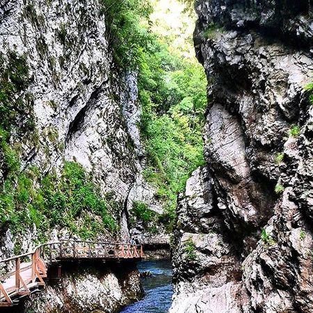 Vintgar Bled Jesenice Slovenia Nature Gorge Klamm Traveling TripAdvisor Instatravel VSCO Vscocam