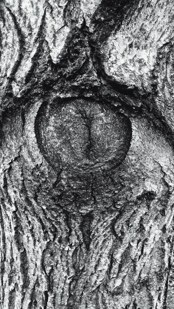 Eye EyeEm Nature Lover Nature Plant Old Oldplant Blackandwhite Black & White Blackandwhite Photography Black And White Nature Textured  Abstract No People Art White Background