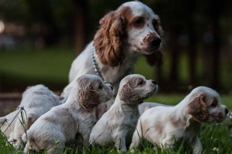 Close-Up Of Puppies And Mom