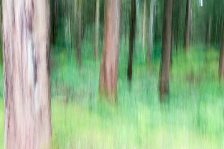 A blurred motion shot of the forest Long Exposure Shot Tree Tree Trunk TreePorn Trees WoodLand Abstract Backgrounds Beauty In Nature Blur Blurred Motion Day Forest Forest Photography Forest Trees Forestwalk Long Exposure Nature No People Outdoors Tree Area Tree_collection  Trees And Nature Treescollection Woods