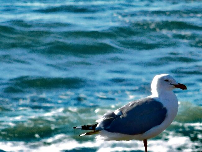 Yachat's Sea Gull... Yachats Oregon Nikon_photography ToolWiz Photos Photo Editor Eyeem U4 Labor Day Weekend 🍔🍟🍉 My Photo Album ♡