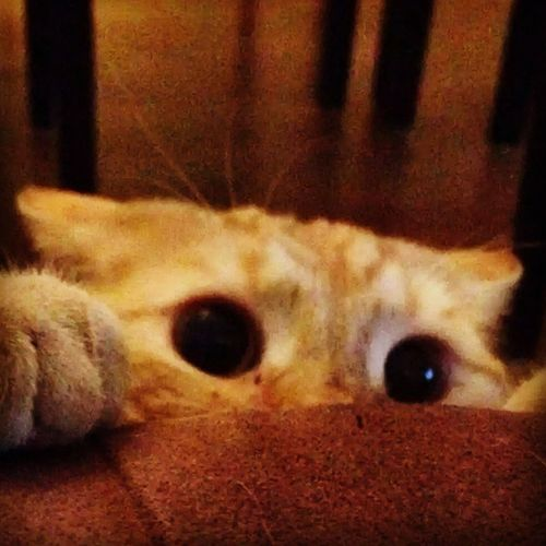 Cat Bobbyinstacat Catoftheday Instacat Catslovers Cutecat