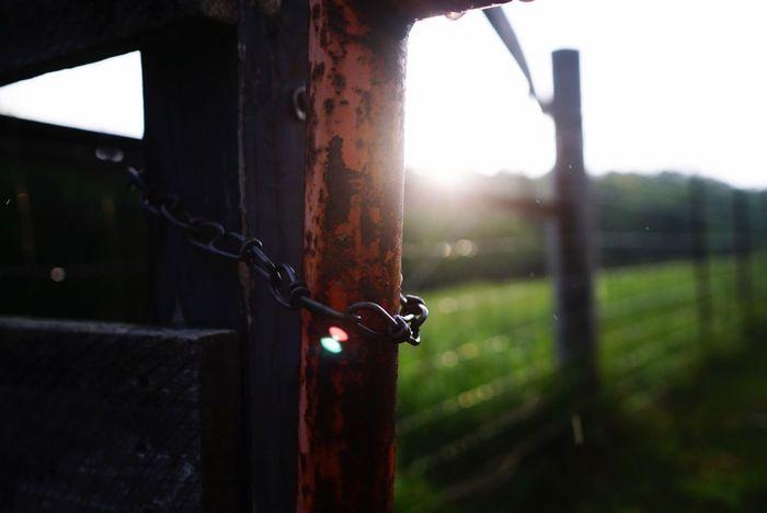 Farmlife Farm Sun Flare Rain EyeEm Best Shots