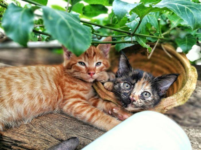 Portrait of kittens lying down outdoors