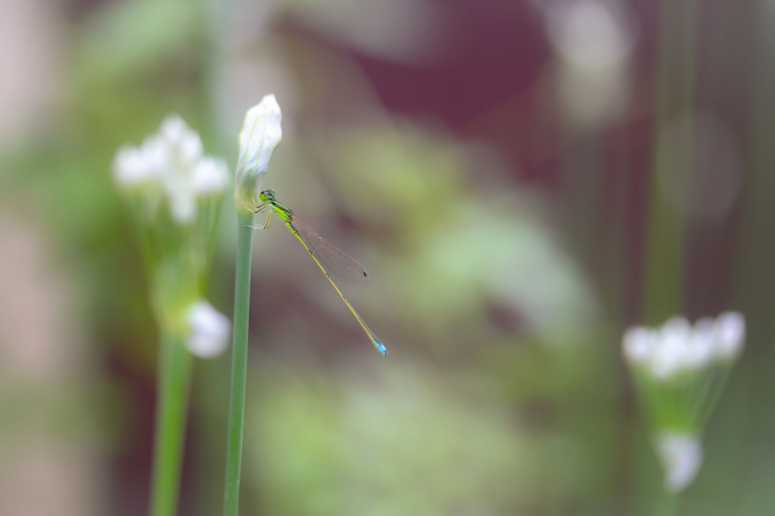growth, close-up, plant, stem, flower, fragility, focus on foreground, freshness, nature, beauty in nature, selective focus, springtime, botany, day, in bloom, outdoors, tranquility, green color, scenics, no people, blossom, plant life, growing, flower head, uncultivated