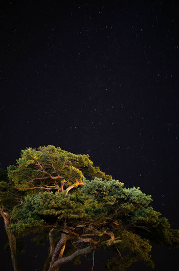 Close-up of tree against star field at night
