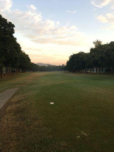 Tree Grass Golf