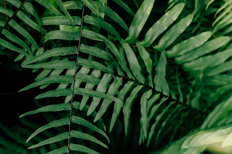 Closeup nature view of green leaf and palms background. flat lay, tropical leaf