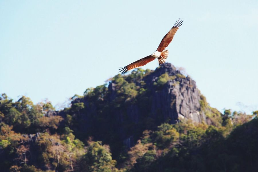 Fly to get your freedom. Nature Naturephotography Eagle Eaglephotography Langkawi Fly Flyaway FlyHigh Eyeemphoto
