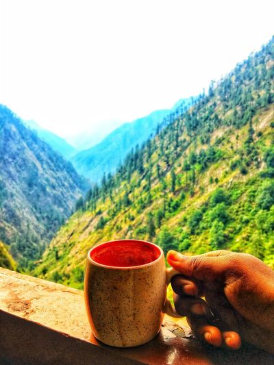 Tea and The Hill Top Mountain Scenics - Nature Environment Beauty In Nature Mountain Range Tree Landscape Plant Land Non-urban Scene Nature Sky Tranquility Tranquil Scene Pine Tree Forest Pinaceae Pine Woodland Coniferous Tree Sunlight