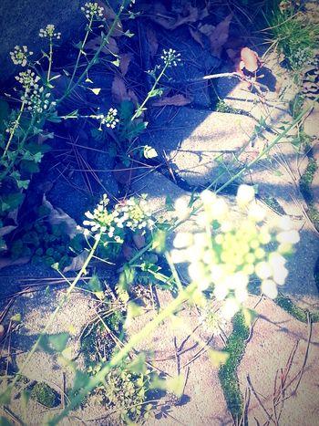 04 꽃 풀 바람에 살랑
