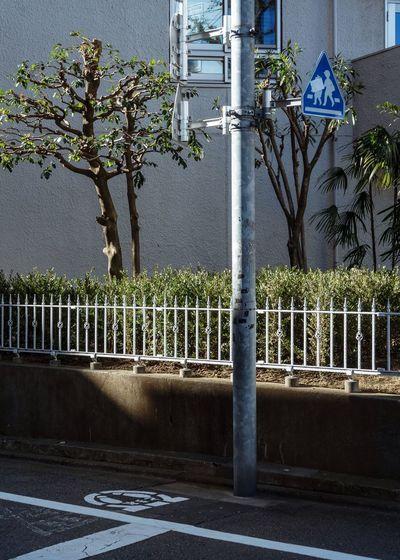 Tokyo, Japan, 2018. 6689 https://instagram.com/p/Bi_96wBlZwC/ EyeEm Best Shots Japan Photography Plant Tree Architecture Built Structure Day Nature No People Building Exterior City Metal Road Fence Sign