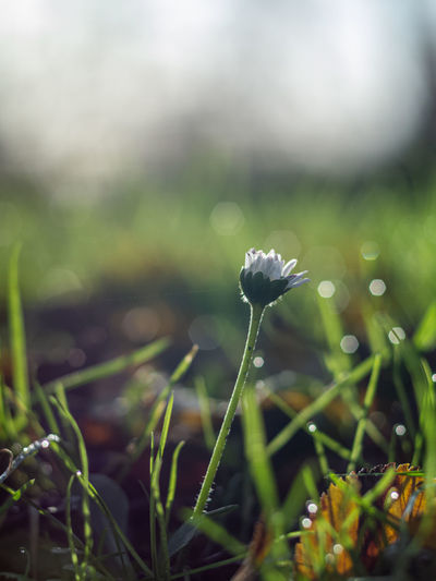 Close-up of small plant growing on field