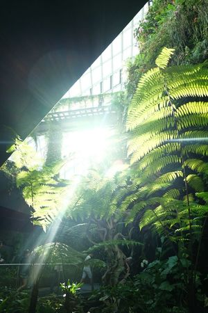 The sun is shining in the garden . Gbtb in Singapore . Sunshine Holidays Fujifilm Fuji X-M1