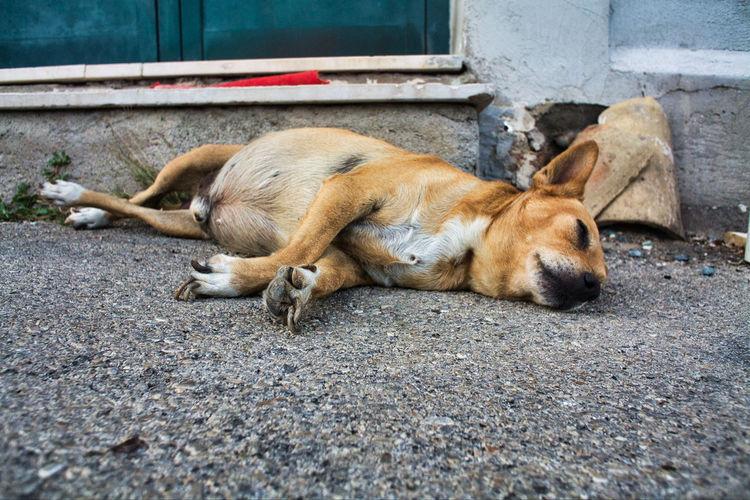 Dog sleeping on sidewalk