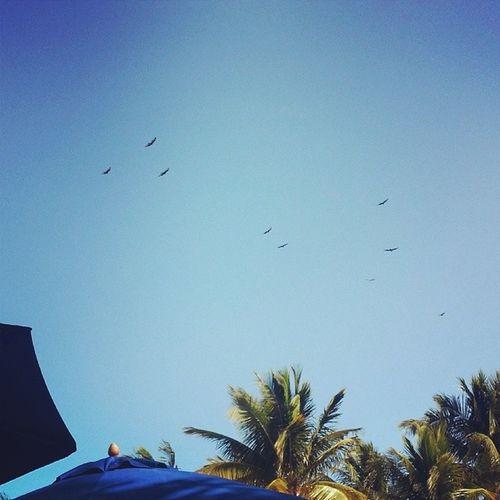 Birdsformbird Birds Florida