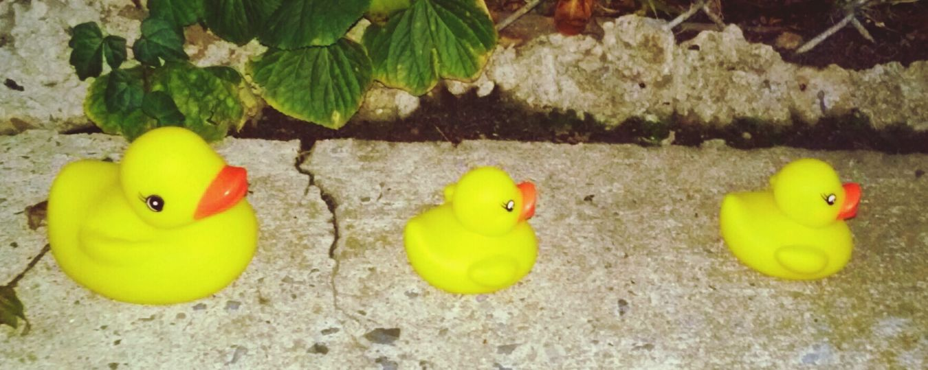 Found This Rubber Ducky The Streets Of Elmhurst