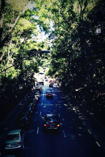 Trees Street São Paulo