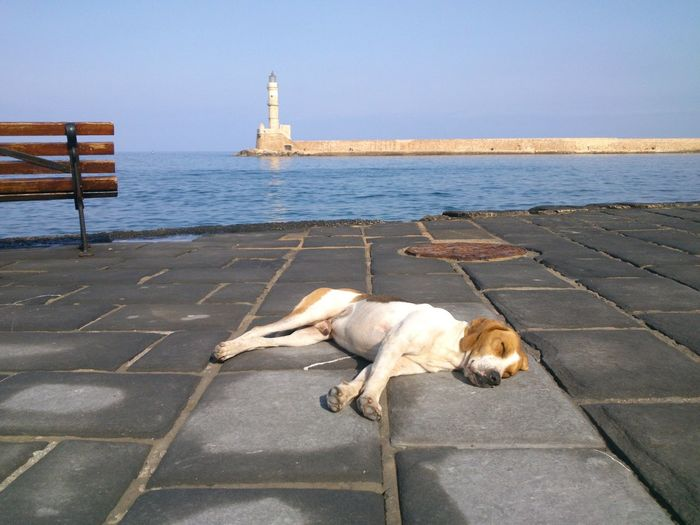 Dog relaxing by sea