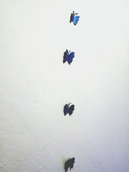 Fly Fly Fly and Fly high. Insect No People Learn