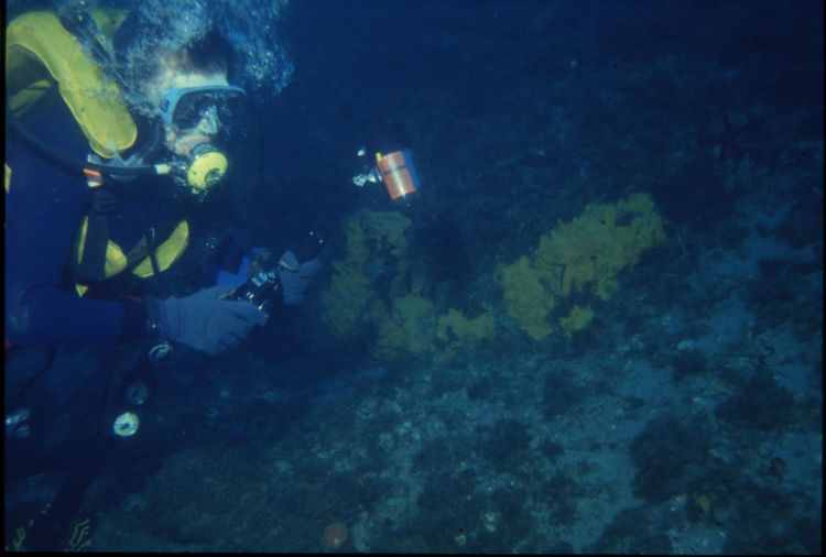 '90 '90s 35mm Film Analogue Photography Diving Man SCUBA Sub Sea Sport