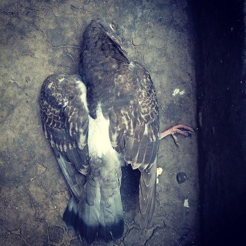 Dead Bird Photography Birds Close-up