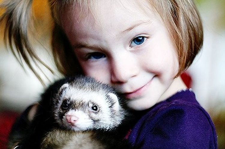 Blond Hair Child Childhood Close-up Cute Embracing Friendship Girls Happiness Looking At Camera Mammal One Animal One Girl Only Pets Smiling