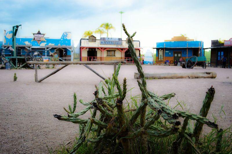 Durango, Durango Mexicolors Mexico_maravilloso Descubriendo Rincones Somewhere In Mexico Eyeemphotography EyeEm Colors Plant Descubriendo Mi Ciudad