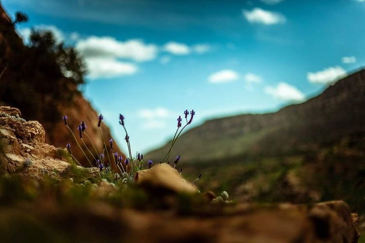 Nature Plant Sky Flower Beauty In Nature Outdoors Growth Nature Photography Zaghouan