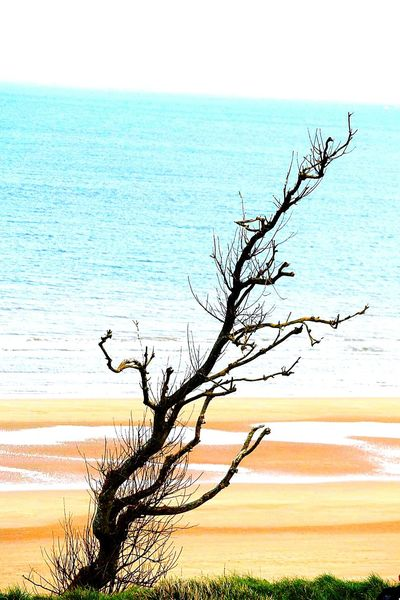 Sea Nature Horizon Over Water Water Bare Tree Beauty In Nature Tranquil Scene Scenics Tranquility Tree Branch Silhouette Landscape No People Plant Beach Day Outdoors Sky Holiday Memories Been There. Travel Nature Normandie France Ohama Beach