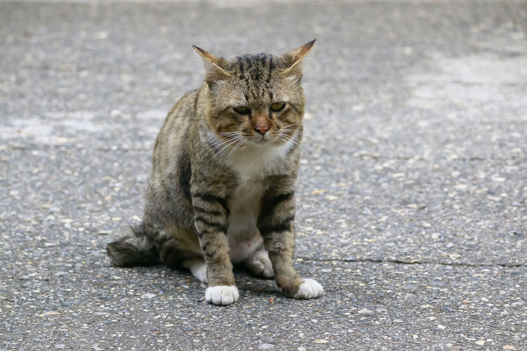 Portrait of a cat sitting on road