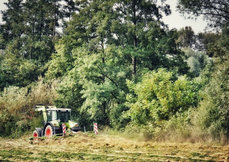 Making Hay Dusty Job Tractor Countryside Rural Scene Rural Landscape Trees Growth Nature Grass Sky Beauty In Nature Working Outside Outdoors Last Days Of Summer Falltime Autumn Action Germany🇩🇪 The Week On EyeEm