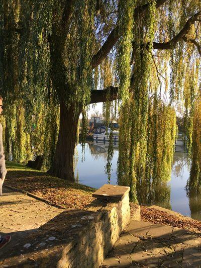 Willow Tree Tree TreePorn Riverside Boats Narrowboat Oxford