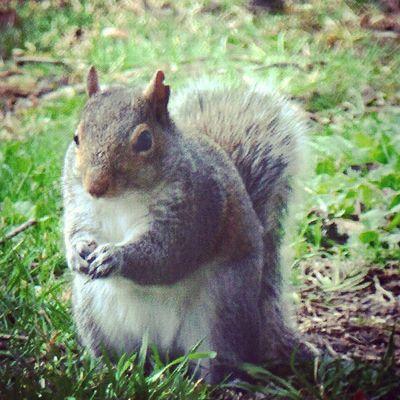 Squirrel Naturehippys Allnatureshots Bns_animals bestnatureshot igers_of_wv ig_captures love_natura ptk_nature rural_love splendid_animals wv_igers fifty_shades_of_nature nature_cuties wv_nature phototag_it rsa_country