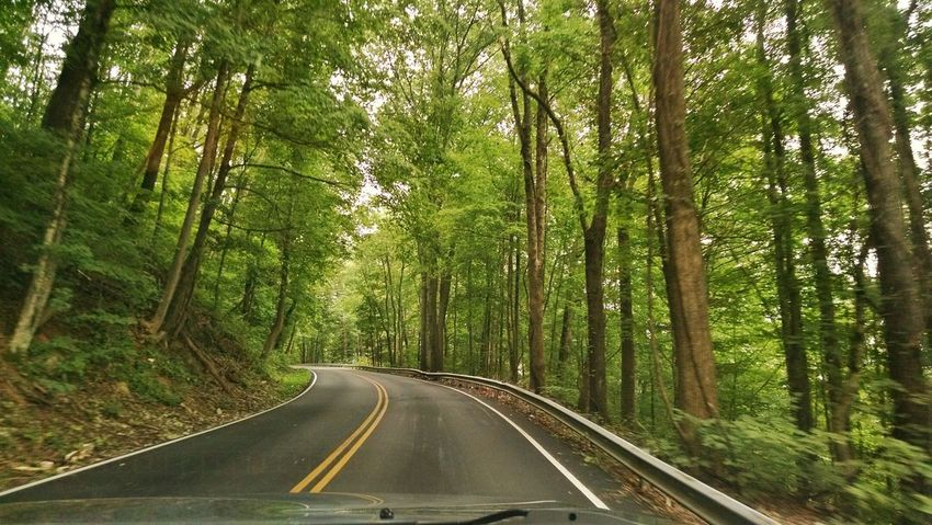 Completely surrounded by trees ❤ Enjoying Life Skipping School Tennessee Beautiful Nature Different Perspective On The Road Trees Mountain Road also got my braces off today 😁